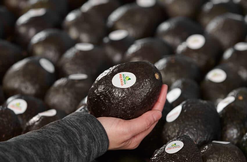 Avocado Innovation
